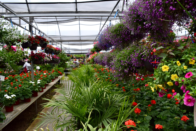 Home Stockslagers Greenhouse Garden Center