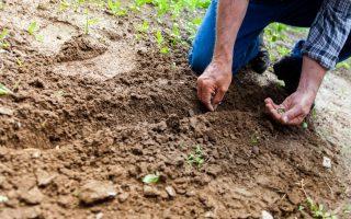 Organic, Heirloom, and Hybrid Seeds