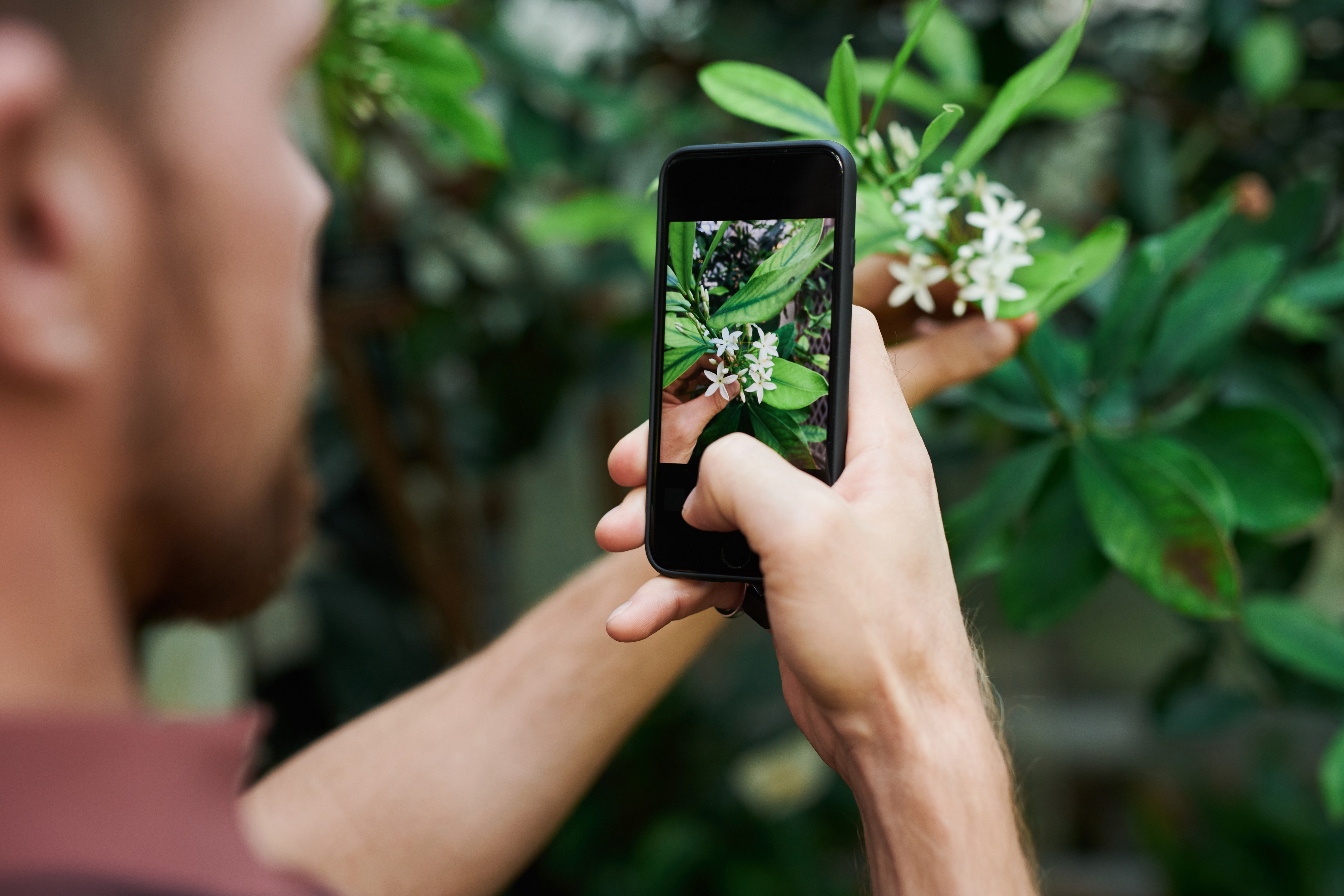 The 3 Best Free Plant Identification Apps Of 2020 For Dayton Gardeners Stockslagers Greenhouse Garden Center