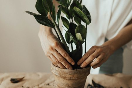 best houseplants low light