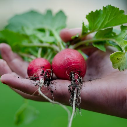 5 steps to your permaculture garden