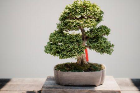 beginner's guide to bonsai trees
