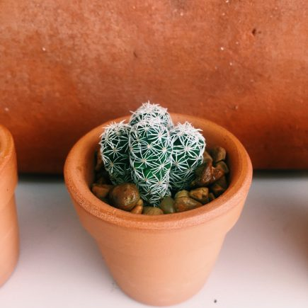 reasons to grow plants in terra cotta pots