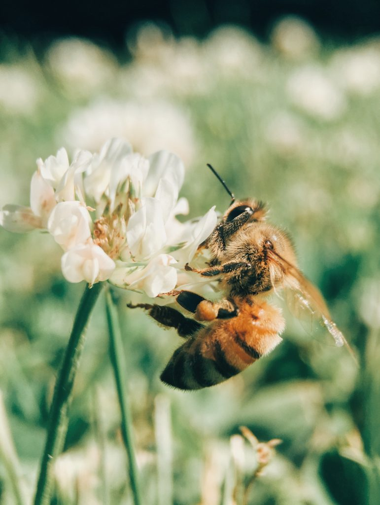 how to support bees in Ohio